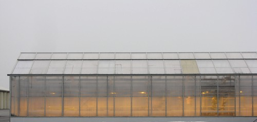 Greenhouse at Vineland Research Centre